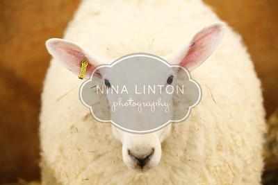RAWF Breeding Sheep Show Misc Photos 2016