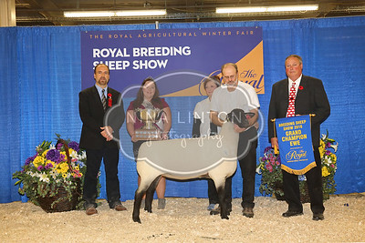 RAWF Breeding Sheep Show Trophy Class Champions