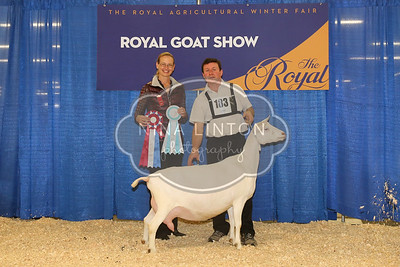 RAWF Dairy Goat Show Saanen Champions and Candids 2016