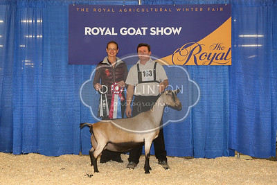 RAWF Dairy Goat Show Alpine Champions and Candids 2016