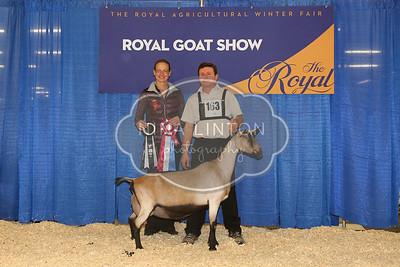 RAWF Dairy Goat Show Alpine Champions and Candids 2016