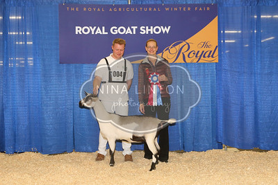All RAWF Dairy Goat Show Champions 2016