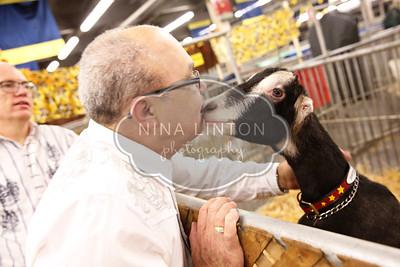 RAWF Dairy Goat Show Misc 2016