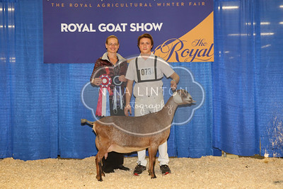 RAWF Dairy Goat Show Nubian Champions and Candids 2016