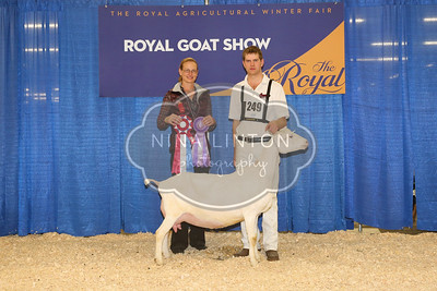 RAWF Dairy Goat Show Recorded Grade Champions and Candids 2016