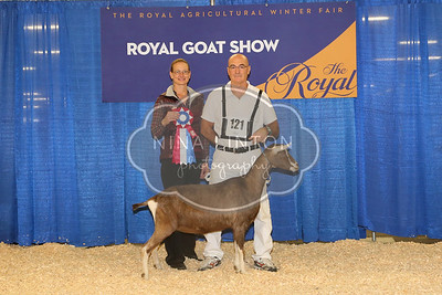 RAWF Dairy Goat Show Toggenburg Champions and Candids