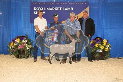 RAWF Market Lamb Sale 2016