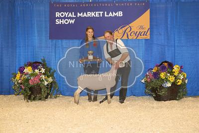 RAWF Market Lamb Show Champions 2016