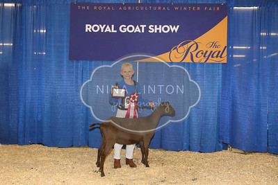 RAWF Youth Goat Show Champions 2016