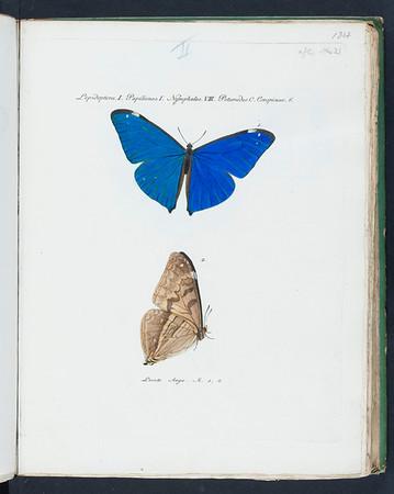 Sammlung exotischer Schmetterlinge, vol. 1, 1806-1824