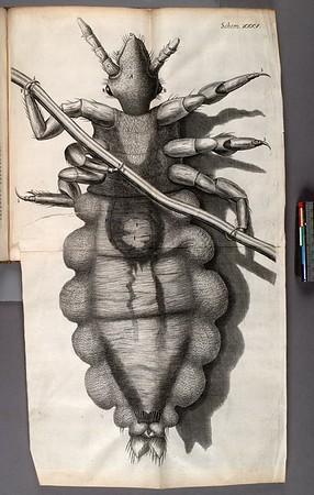 Observ. LIV. Of a louse