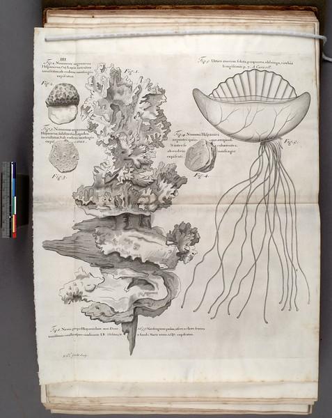 Navis propo Hispaniolam ann. Dom. 1659