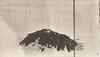 American eagle flying
