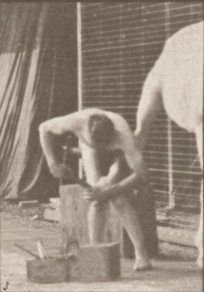 Nude man shoeing a horse