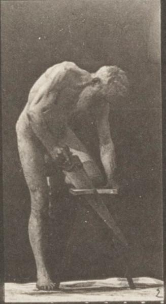 Nude man sawing a board