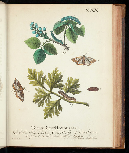 A natural history of English insects