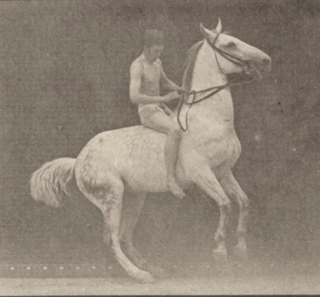 Horses rearing, etc., some with rider