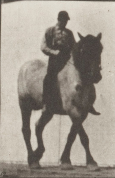 Horse Dusel with bareback rider