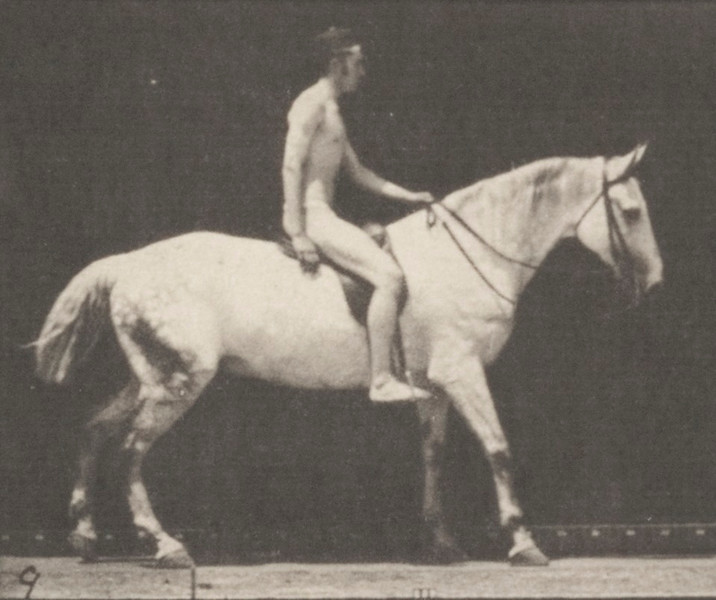 Horse Smith walking with saddle nude rider