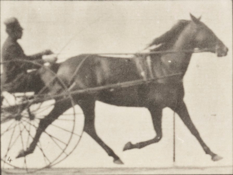 Horse Lizzie M. trotting, harnessed to sulky with driver