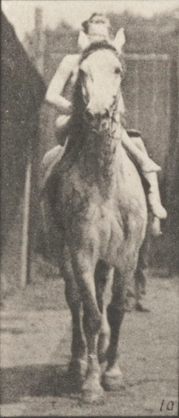 Horse Tom walking, saddled with nude female rider