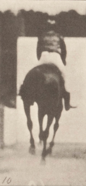 Horse Annie G. cantering, saddled with rider