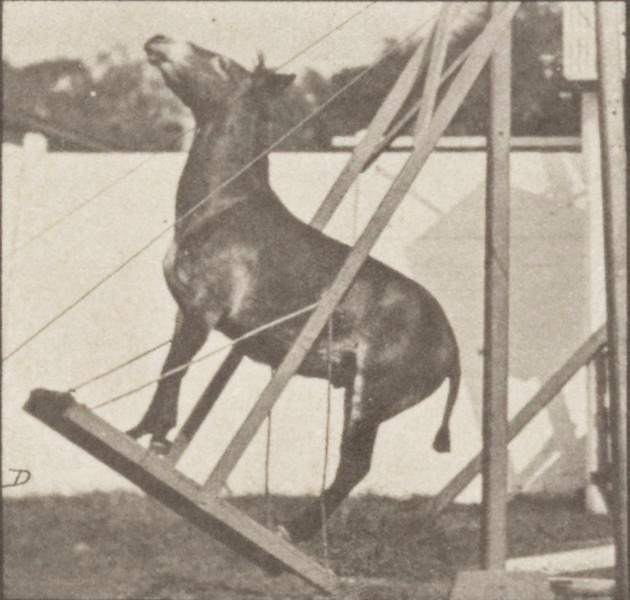 Horse Denver, miscellaneous performances