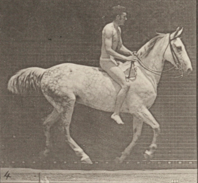 Horse Smith cantering, bareback with nude rider