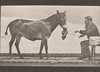 Horse Denver, various performances, at a table, etc., with trainer