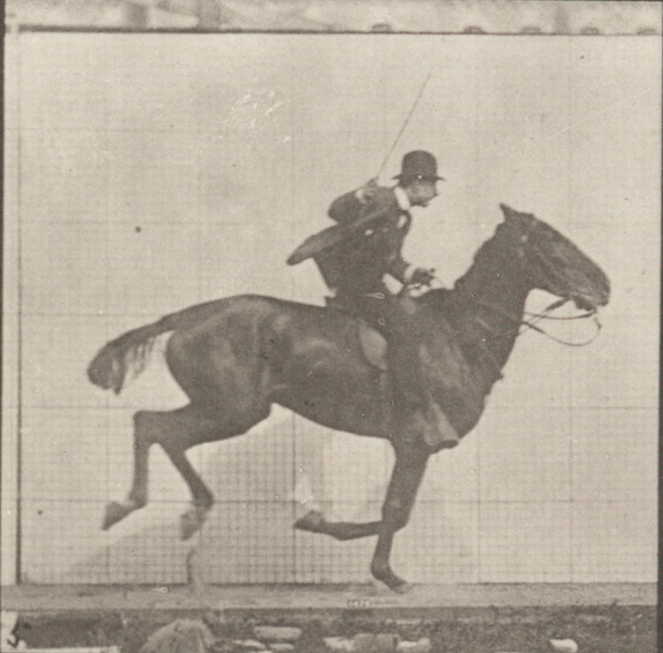 Horse Daisy galloping, saddled with rider