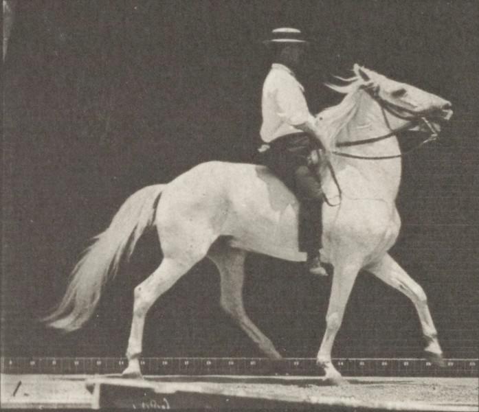 Horse Clinton ambling with bareback rider