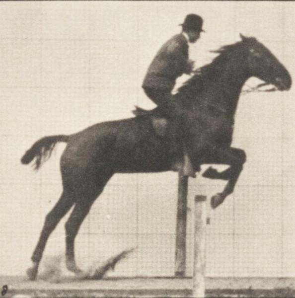 Horse Daisy jumping a hurdle, saddled with a rider