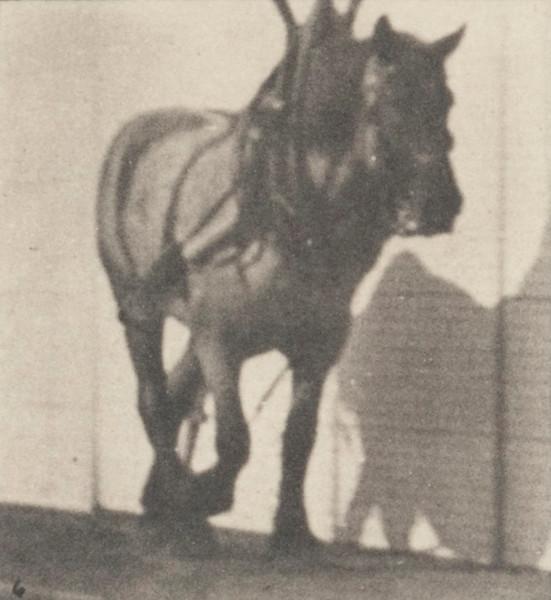 Horse Dusel hauling broken log chain