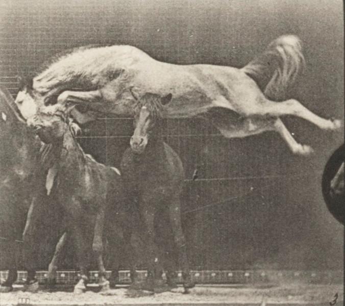 Horse Hornet jumping over three horses
