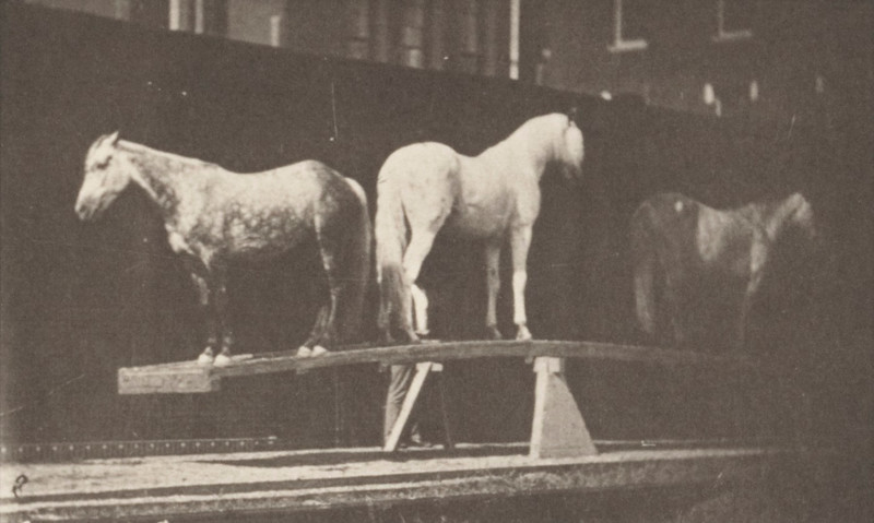 Horses on teeter board