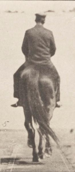 Horse Beauty walking with saddle back rider, irregular