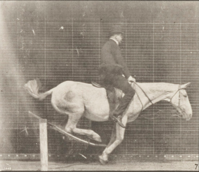 Horse Pandora jumping hurdle, saddled with a rider, knocking over the hurdle and landing