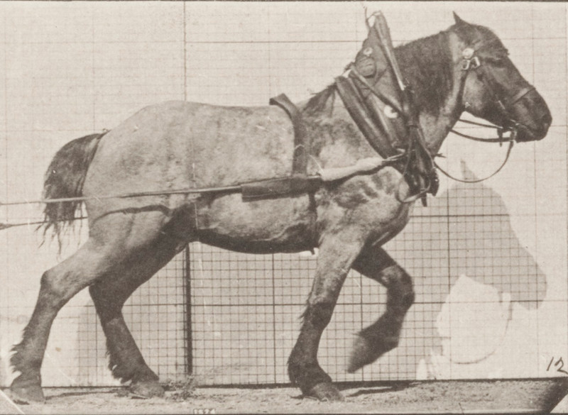 Horse Dusel hauling