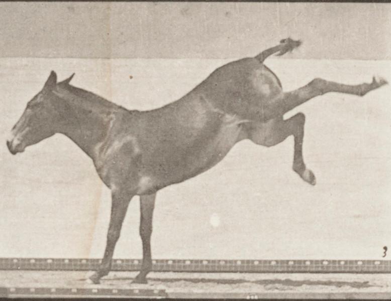 Horse Ruth kicking