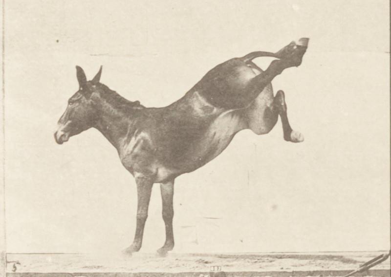 Horse Ruth bucking and kicking