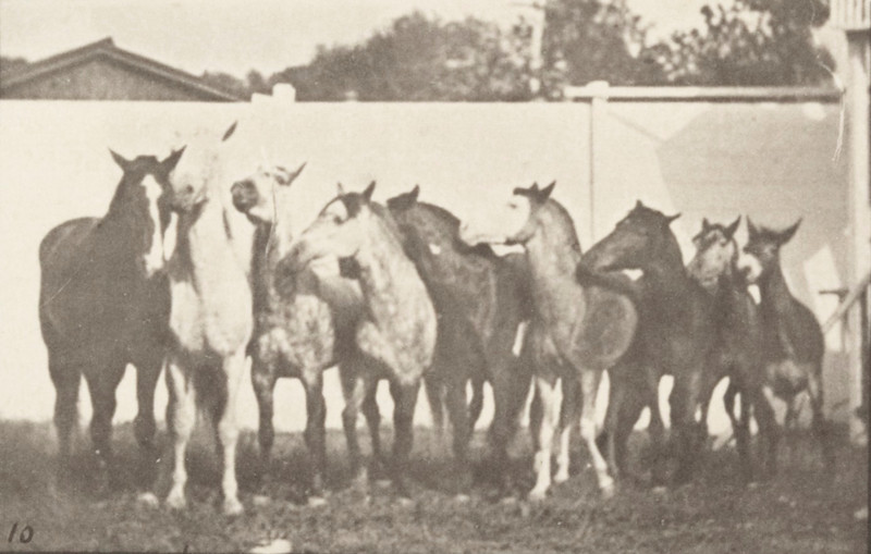 Horses on military drill