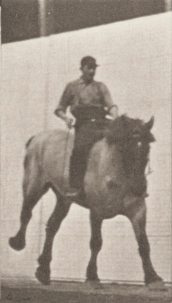 Horse Hansel galloping, bareback with rider