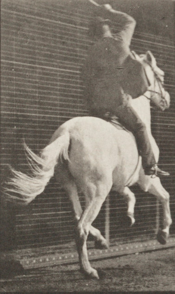 Horse Dan galloping, saddled with rider