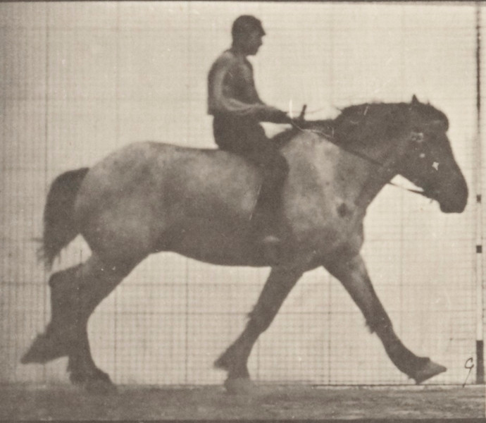 Horse Hansel cantering, bareback with rider