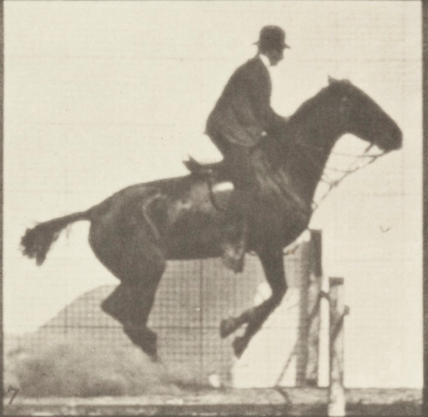 Horse Daisy jumping a hurdle, saddled with a rider