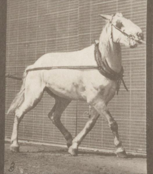 Horse Johnson hauling