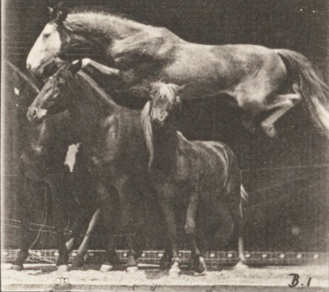 Horse Hornet jumping over three horses