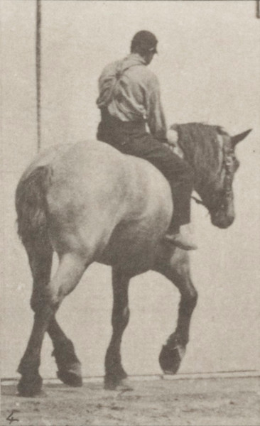 Horse Dusel trotting with bareback rider