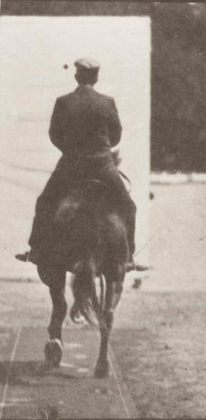 Horse Beauty trotting saddled with rider