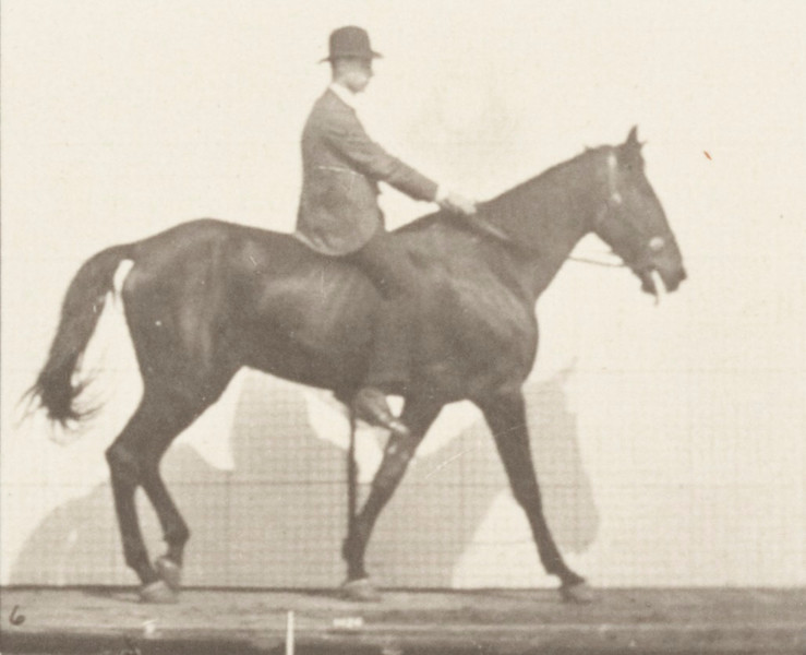 Horse Gazelle walking, spavin, right hind leg with rider